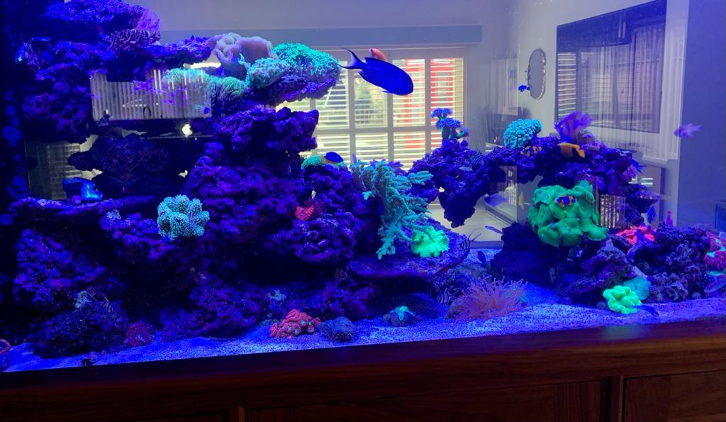 Aquarium Installation