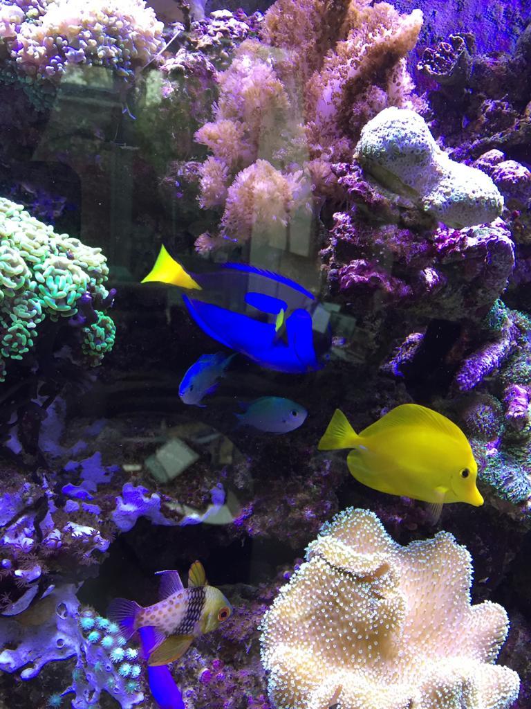 Aquarium Experts