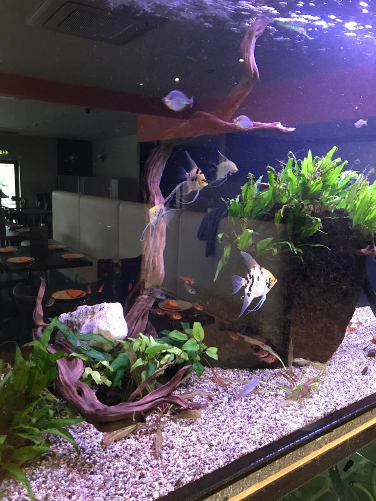 Planted Aquarium Installation