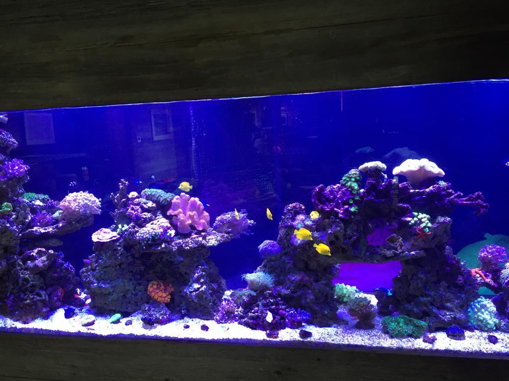 Large Aquarium Installation, Manchester