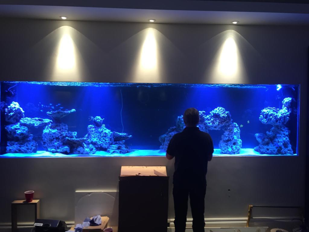 Large Aquarium Installation, Beconsfield