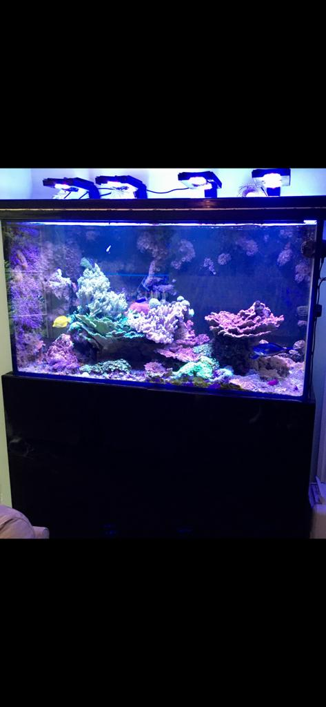 Built In Aquarium